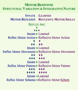 mnri-structural-variation